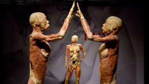 Vypreparovaná ľudské telo na vykazujú telo